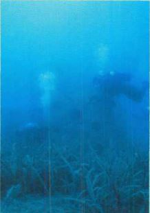 IELTS Reading sample creating artificial reefs