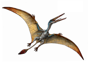 IELTS GT Reading - Pterosaur