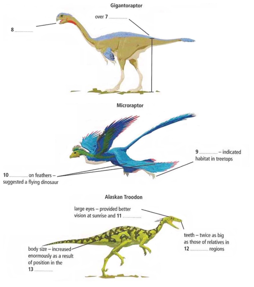 Labels on the diagrams - Dino discoveries