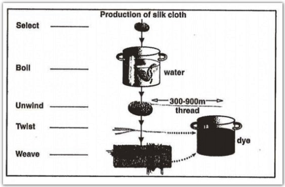 Academic ielts writing task 1 sample 94 life cycle of the silkworm stages in the production of silk cloth ccuart Images